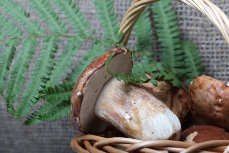 Wicker basket with porcini mushrooms and a bunch of blooming heather. Shot on a background of coarse linen fabric with a sheet of fern. Stok Fotoğraf