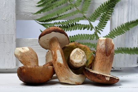 A few fresh porcini mushrooms on a background of white boards. In the background is a fern leaf.