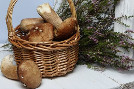 Wicker goat with porcini mushrooms. One mushroom lies nearby. In the background is a bunch of blooming heather and a box of white painted boards. Stok Fotoğraf