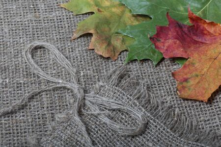 Colorful autumn leaves on a background of rough linen cloth. Bow made of threads for decoration. Stock Photo