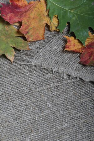 Colorful autumn leaves on a background of rough linen cloth.