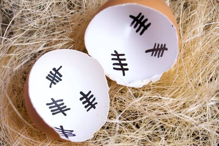 Chipped eggshell in the nest. It marks the days past. Chicken hatching.