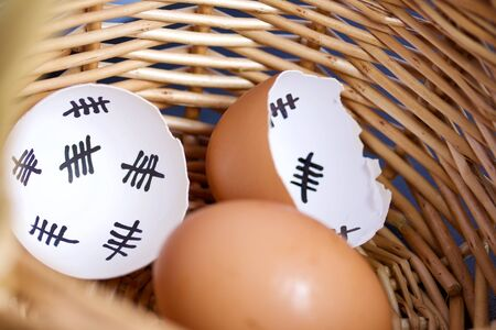 Chipped egg shell and egg in the nest. In the shell past days are marked with dashes. Chicken hatching. Zdjęcie Seryjne