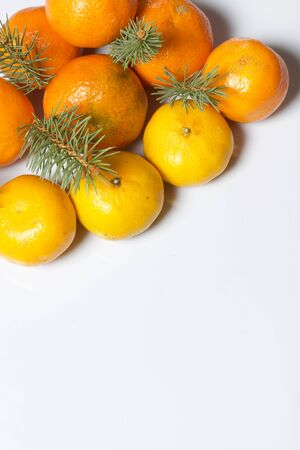 Mandarins are laid out on a white surface. Between them are branches of blue spruce. On white background.