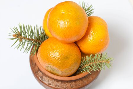 Tangerines in a clay pot. Between them are branches of blue spruce. On white background.
