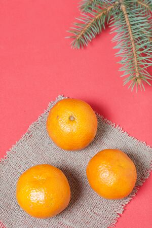Tangerines are folded on linen. Near a branch of blue spruce. On a coral background. Stock Photo