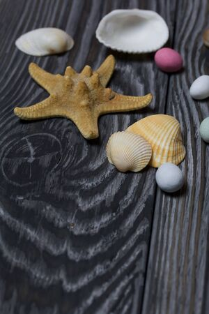 Starfish, pebbles and many different seashells. On brushed pine boards painted in black and white.