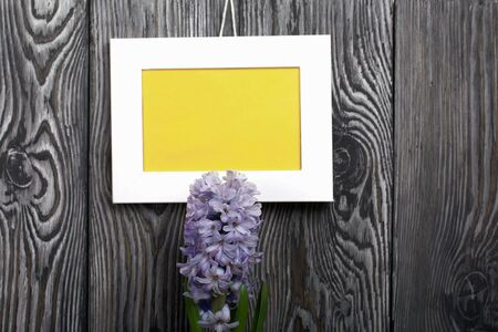 Lilac blooming hyacinth. The photo frame is white with a yellow field. Located against the backdrop of brushed pine boards painted in black and white. Archivio Fotografico