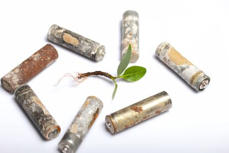 Sprout with green leaves and sprouted roots. Around him, spent batteries are coated with corrosion. On white background. World Environment Day. Banque d'images