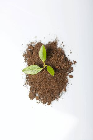 A handful of earth. From it grows a sprout with green leaves. On white background. World Environment Day.