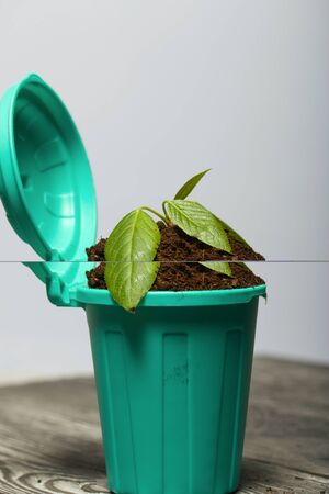 Trash bin filled with earth. It grows a green sprout. World Environment Day.