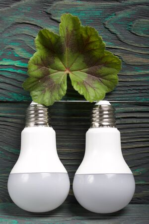 LED bulbs on pine boards painted in black and green. Green leaf. Green technology. Reklamní fotografie