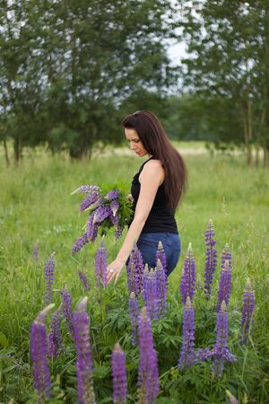 A girl with a bouquet of lupine is standing in a meadow. Lupine is blooming around. Stock Photo