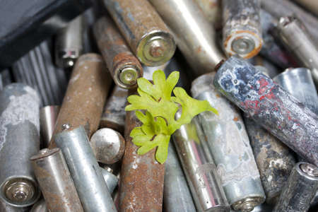 Corroded used batteries. Among them is a wilted sprout. On pine boards. Disposal of hazardous waste.