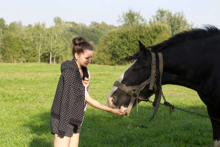 The girl strokes and feeds the horse. The horse grazes on a green meadow.