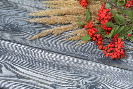 A bouquet of dried grass and rowan branches. They lie on black pine boards. 版權商用圖片