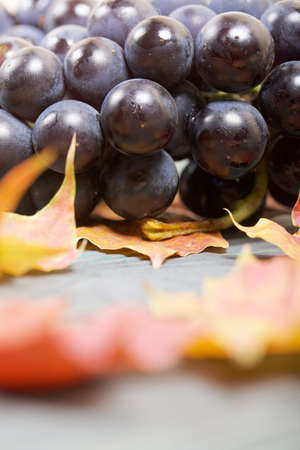 Bunches of dark blue grapes. Nearby are autumn maple leaves. Against the background of pine boards, it is black and green. Close-up shot.