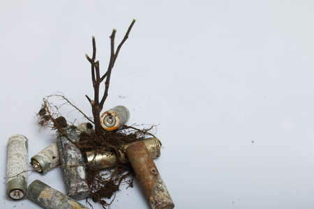 A dried plant with a root system. Among the corroded waste batteries. Environmental protection and waste recycling. Filmed on a white surface.
