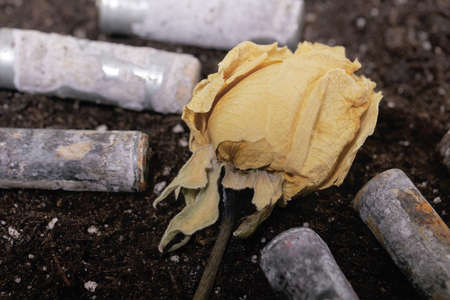Corroded batteries covered with earth. Dried rosebud. Environmental protection and waste recycling. Close-up shot.