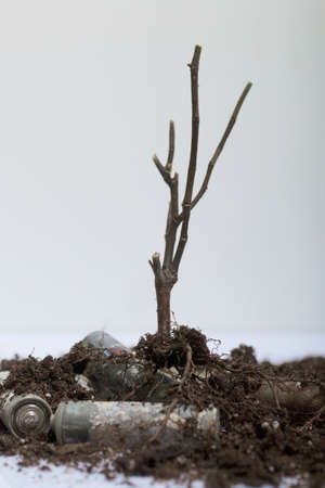 A withered plant. Stands among the corroded waste batteries. Environmental protection and waste recycling. Close-up shot.