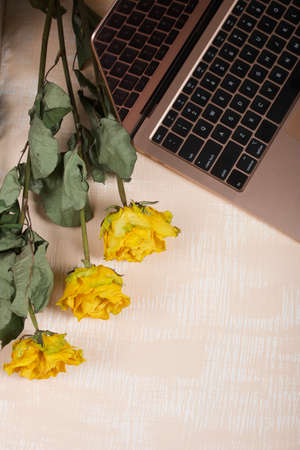 Fragment of an open laptop in pink. Nearby are yellow roses. The surface is painted in white and beige.
