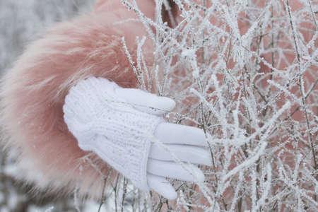 在一个白色手套的一只女性手在一个冬天公园接触一个干植物。该植物覆盖着霜冻。