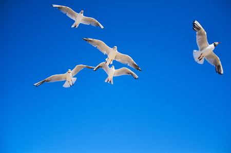 Seagull fly and a blue sky