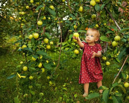 Little cute girl walking barefoot in the garden near the apple tree photo