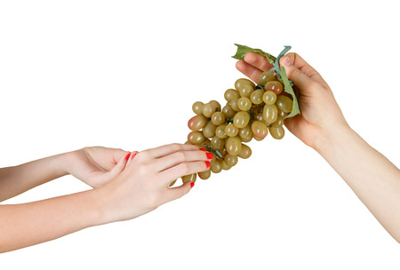 conveys: Male hand conveys a female hand vine isolated on white background
