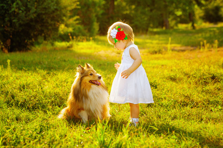 Little girl and dog breed sheltie playing outdoors on a sunny day Banco de Imagens