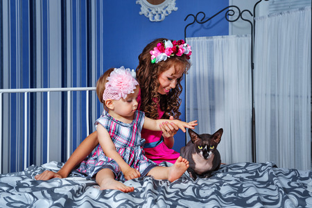 bald girl: cute little sister with gray sphinx cat sitting on a bed