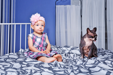 bald girl: Cute little girl with gray sphinx cat sitting on a bed