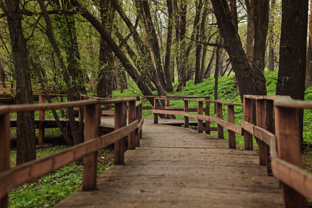 without people: Wooden walkway in the forest. Mystical journey ahead. Forest without people. Calming landscape in the park.