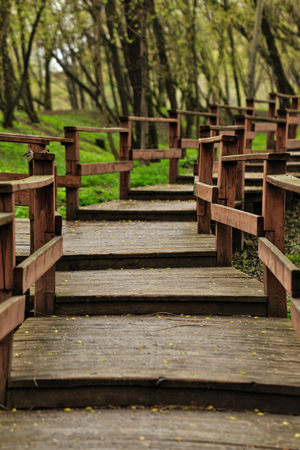 persoonlijke groei: Wooden paths in the forest. Steps. Mystical journey ahead. Personal growth. Forest without people. Meditotivny landscape in the park.