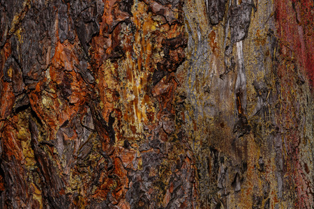 untreated: Pine bark background. Untreated wood. Grungy texture. Stock Photo