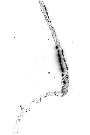 thirst quenching: Abstract of water splash on a white background. Texture of water. Elements of design. Waterfall. Shower. Watering. Water jet. Quenching thirst. Refreshing.