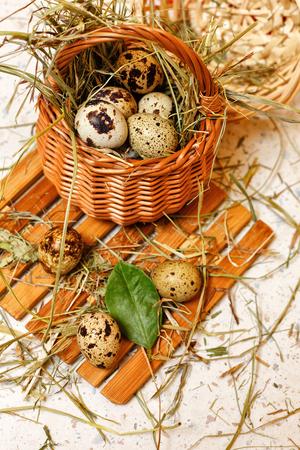 nido de pajaros: huevos de codorniz en la cesta. Delicadeza. dieta de la proteína. Foto de archivo