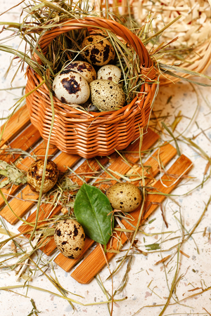 nest egg: Quail eggs in basket. Delicacy. Protein diet. Stock Photo