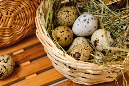 huevos de codorniz: huevos de codorniz en la dieta en la cesta. Pascua de Resurrecci�n. Foto de archivo