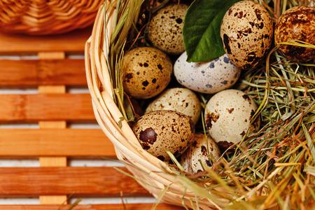 huevos de codorniz: huevos de codorniz frescos en la cesta. Delicadeza.