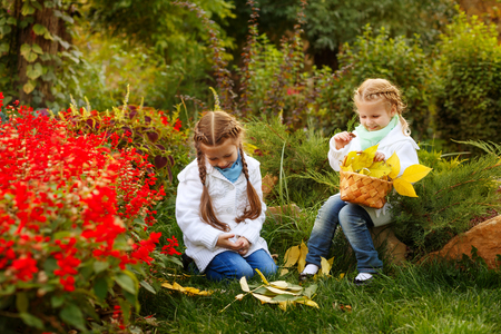Two cute sisters collect fallen leaves in a wicker basket. Girl chooses beautiful leaves. Autumn mood. Family time.