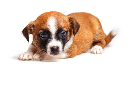 droppings: Cute not purebred puppy closeup. Pets need our support and care.