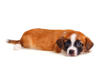 Cute not purebred puppy closeup. Pets need our support and care.
