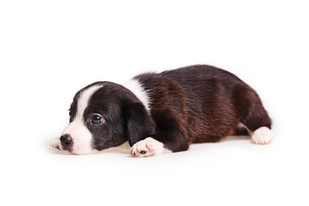 Cute puppy not purebred feels sad. Pets need our support and care. Stock Photo