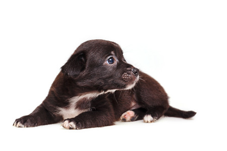 Cute not purebred grief. Pets need our support and care. The owner search. Stock Photo