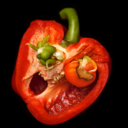 Scary face of pepper. A terrible vegetable. A horror story for a vegetarian. Background for Halloween Stock Photo
