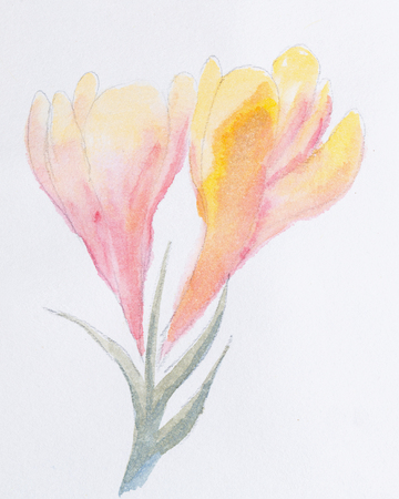 The flower is watercolor paint. Spring flowers. Botanical painting.
