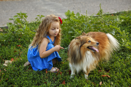 Cute little girl with a dog Sheltie breed. Best friends forever. Dog devotion. Girl and pet darling in the park Stock Photo