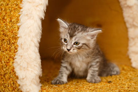 selectively: The cute little kitty has just woken up. Pets. Hypoallergenic breed of cats