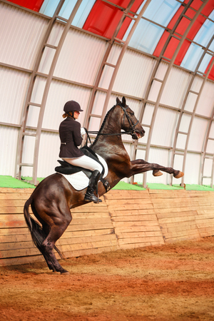 uomo a cavallo: A sweet girl jockey rides a horse in a covered arena. Training candles, stand on hind legs. A pedigree horse for equestrian sport. Archivio Fotografico